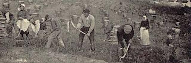 immagine di un gruppo di contadini che zappano la terra