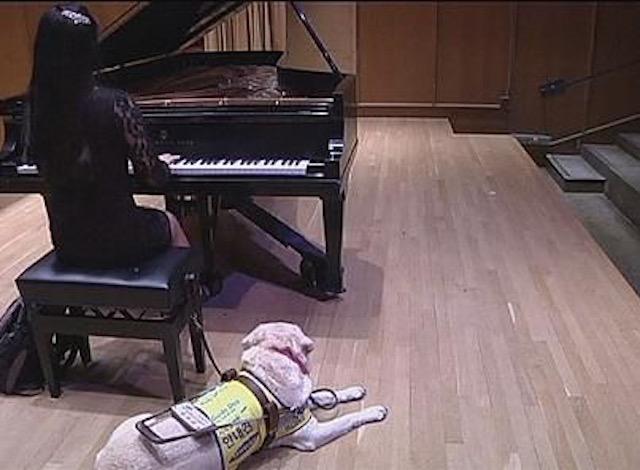 Pianista cieca al pianoforte con accanto il suo cane guida